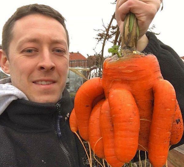 13. Tôi rút ra một củ cà rốt và hoảng hốt.