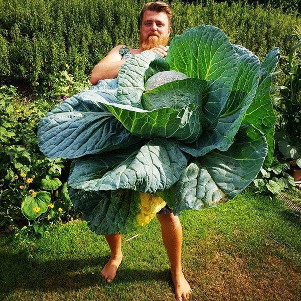 15. Hoàn toàn có thể làm một chiếc váy từ bắp cải này.