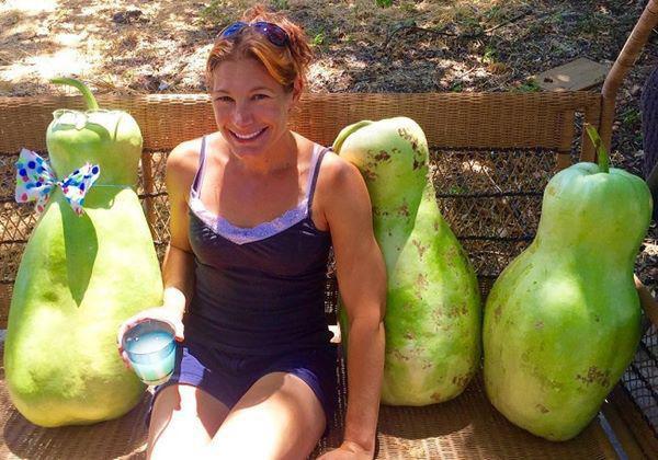 6. Đây là những quả bầu zucca thực sự lớn trông giống như những quả lê khổng lồ.