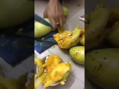 Hàng loạt quả xoài được đem ra thí nghiệm chỉ vì nghi ngờ có cắm tăm chứa chất bảo quản. Ảnh cắt từ clip