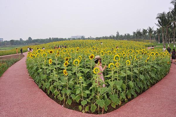 Khu vực trồng hoa được thiết kế hiện đại, sạch đẹp.