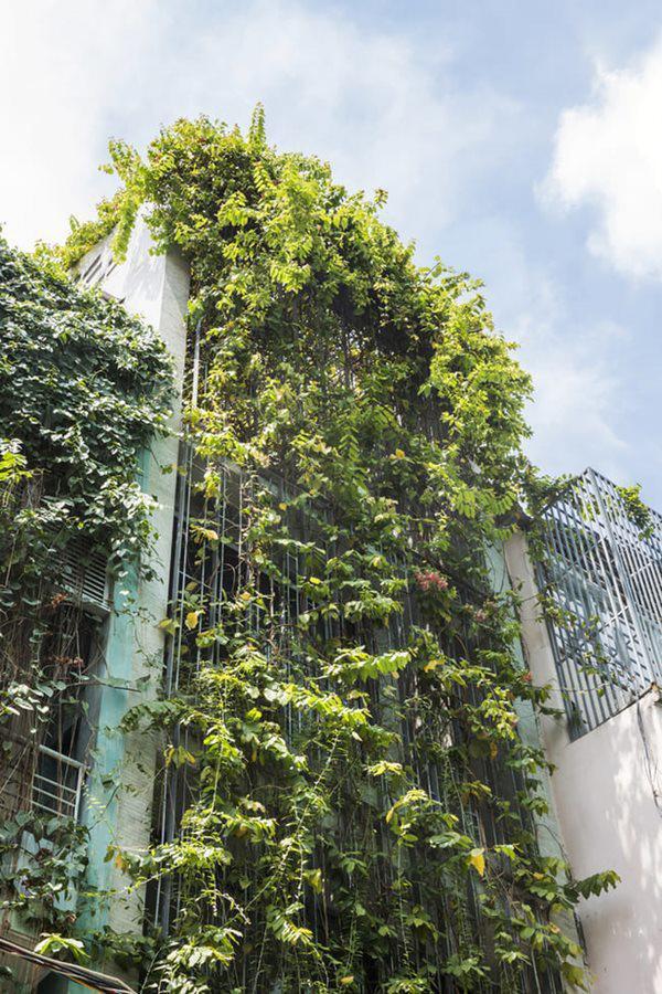 Sở dĩ KTS đặt tên cho công trình của mình là Ngôi nhà thở bởi sự thoáng mát, rợp bóng cây.