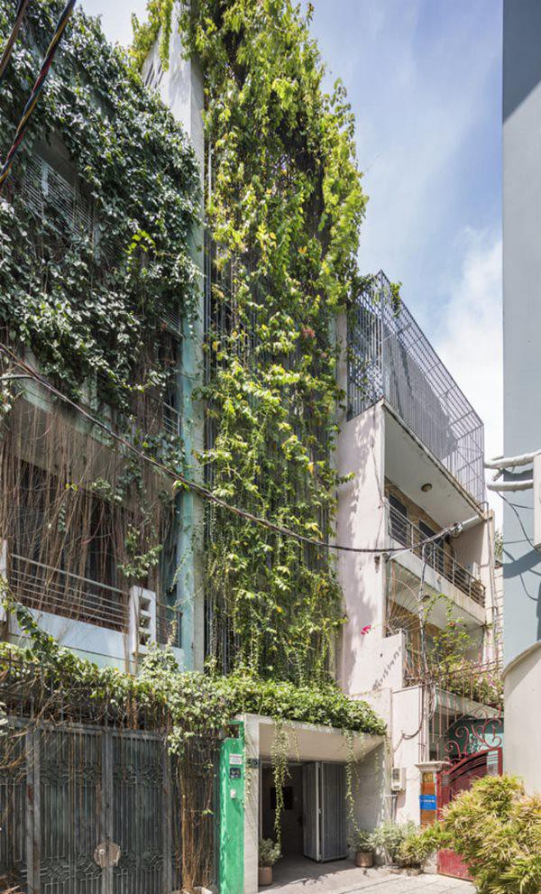 Toàn bộ mặt tiền rợp bóng cây khiến khách đến nhà ngỡ bước vào một ngôi nhà bỏ hoang.
