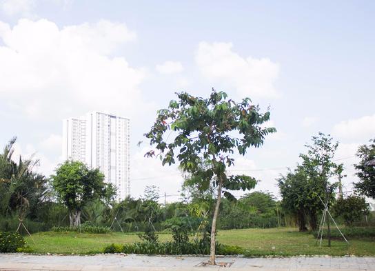 Bên phải ngôi nhà là một mảnh công viên nhỏ. Đây có thể là nơi vui chơi của con trai út của Kim Tử Long.