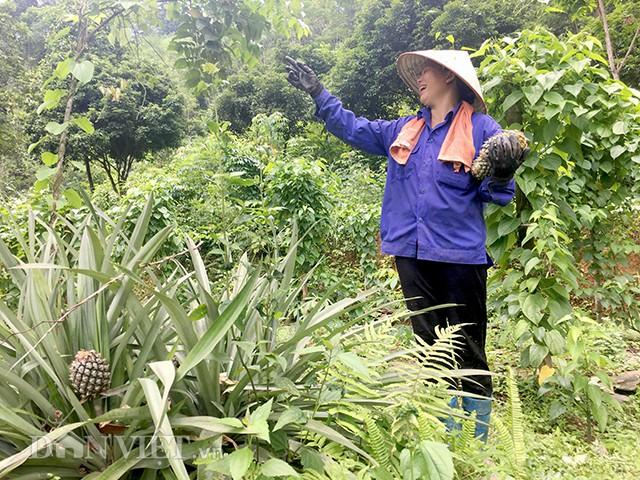 Ngoài cây sachi, gia đình anh Tuấn còn trồng xen lẫn thêm nhiều loại cây ăn quả, cây dược liệu khác.