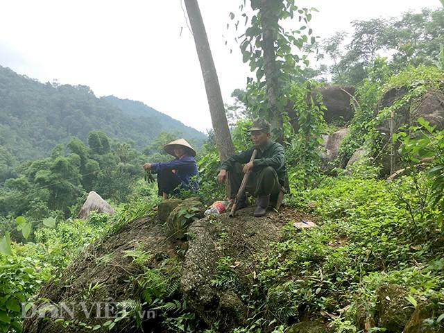 Những lúc nghỉ ngơi, anh Tuấn chị Liên lại lặng lẽ ngắm thành quả của mình và tính toán cho việc mở rộng thêm diện tích trồng cây sachi.