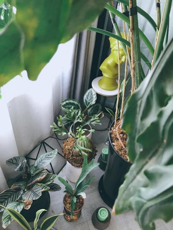 Một góc nhỏ với các loài cây thanh lọc không khí.
