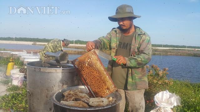 Nhờ việc cho những đàn ong của mình đi kiếm phấn hoa sú, vẹt làm mật ngọt tại các cánh rừng ngập mặn đã giúp anh Nguyễn Hùng Ái thu được hàng trăm triệu đồng mỗi vụ.