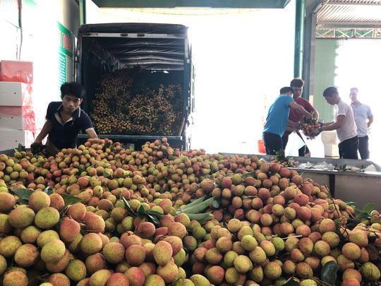 Vải sớm Bắc Giang giá dao động từ 40.000 đồng - 60.000 đồng/kg nhưng đã thu hoạch gần hết.