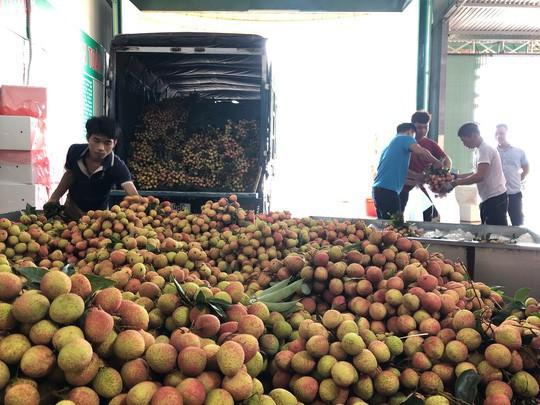 Vải sớm Bắc Giang giá dao động từ 40.000 đồng - 60.000 đồng/kg nhưng đã thu hoạch gần hết