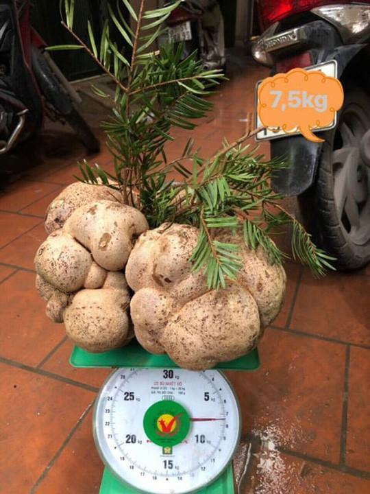 Với cây nấm này, chị Hà bán giá gần chục triệu đồng.