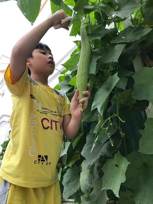 Nữ diễn viên cùng con trai hái khoảng 10 trái to, trên cây vẫn còn nhiều trái nhỏ bằng vài đầu ngón tay hoặc mới đậu.