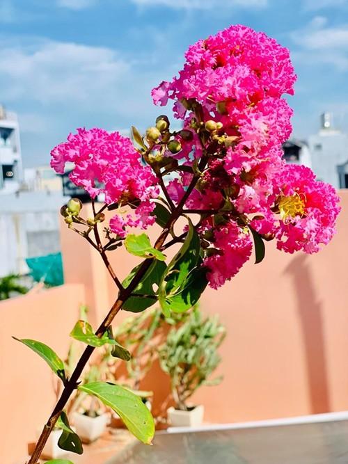 Thúy Nga tâm sự, chị yêu thiên nhiên, thích trồng cây nhưng không có nhiều thời gian nên chọn trồng các loại cây dễ tính.