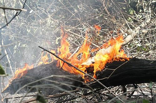 Đám cháy rừng 2 ngày ở Hà Tĩnh chưa được dập tắt  - Ảnh 2.