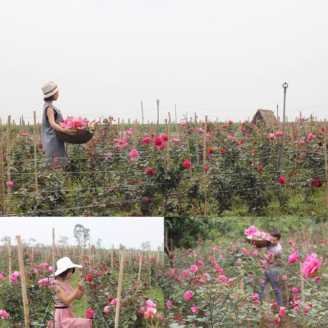 Là 2 người bạn rất thân, đều yêu hoa hồng và yêu mỹ phẩm thiên nhiên nhưng lại chưa hề có kinh nghiệm nào nên khi bắt tay vào thực hiện dự án, cô và người bạn của mình đã cất công nghiên cứu, tìm hiểu và đầu tư rất nhiều.