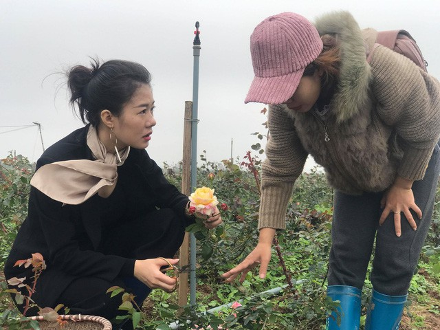 Hoàng Kim Ngọc đã tìm và thuê 10 héc ta đất để canh tác các nguyên liệu thiên nhiên và đã sử dụng hơn 2 héc ta để trồng hoa hồng ngoại.