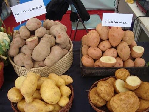 Khoai tây Trung Quốc từng đội lốt khoai tây Đà Lạt để lừa người tiêu dùng.