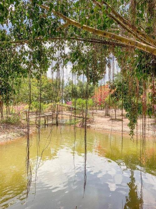Được biết khu đất rộng rãi này là chốn nghỉ ngơi cuối tuần của Minh Hằng. Ở khu đất này, gia đình cô nuôi gà, thả cá và trồng cây ăn quả, rau xanh để cung cấp nguồn thực phẩm sạch cho cả nhà.