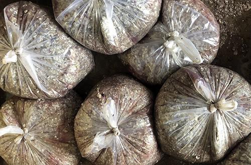 Vảy cá được đóng gói tại một cơ sở làm khô cá lóc ở xã Phú Thọ, huyện Tam Nông, tỉnh Đồng Tháp. Ảnh: Cửu Long.