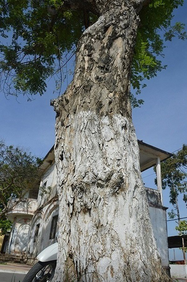 Ngôi nhà Hội đồng Dư ít người biết ở vùng Nam Bộ  - Ảnh 6.