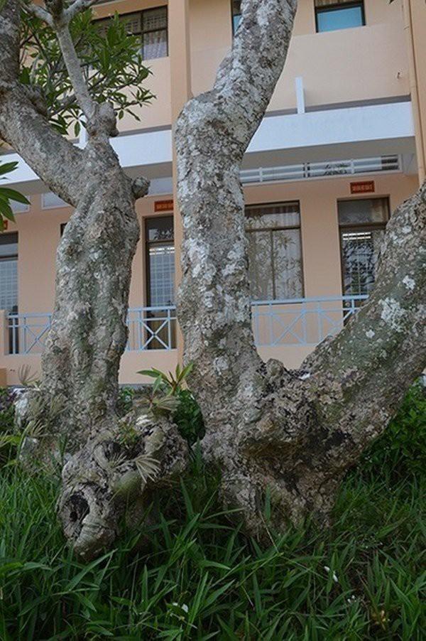 Ngôi nhà Hội đồng Dư ít người biết ở vùng Nam Bộ  - Ảnh 8.
