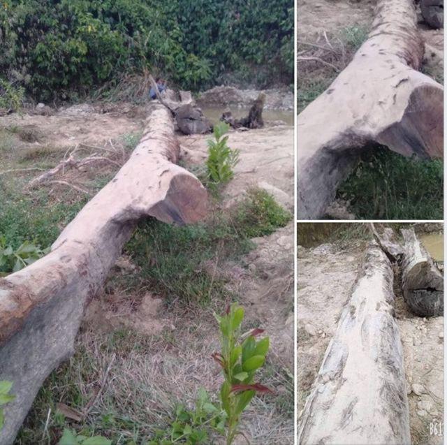 Đi mò ốc, phát hiện cây gỗ quý hàng trăm năm tuổi nằm sâu dưới lòng đất - Ảnh 1.