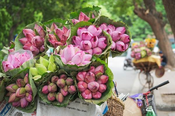Những loài hoa tài lộc, may mắn đắt hàng nhất mùa Vu lan - Ảnh 3.
