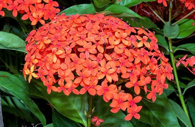 Những loài hoa tài lộc, may mắn đắt hàng nhất mùa Vu lan - Ảnh 5.