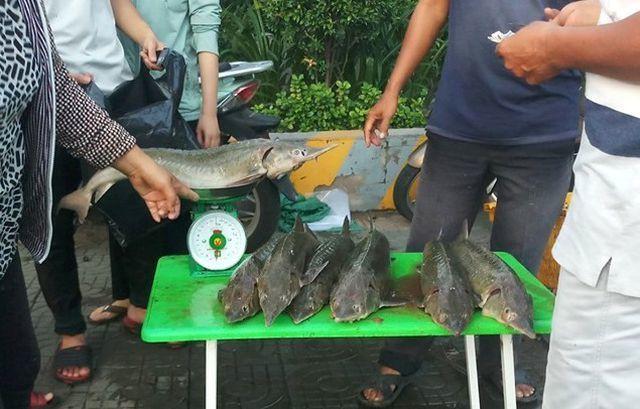 Người TP.HCM đổ xô mua cá tầm 100 ngàn/kg ủng hộ dân vùng lũ - Ảnh 2.
