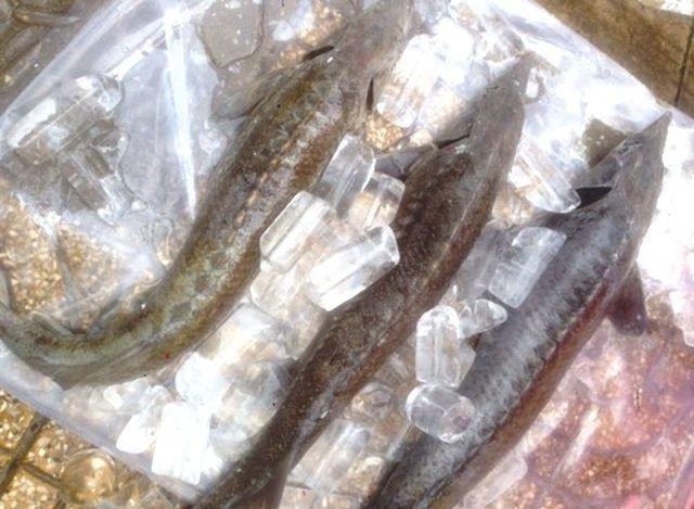 Người TP.HCM đổ xô mua cá tầm 100 ngàn/kg ủng hộ dân vùng lũ - Ảnh 3.