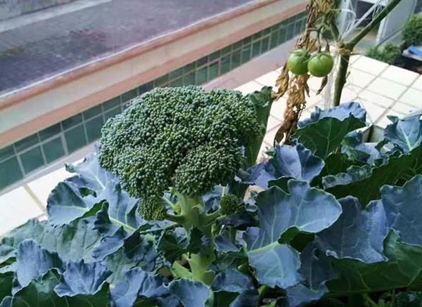 4 loại rau xanh chống ung thư cực tốt, vừa ngon vừa rẻ nhưng nhiều người Việt vẫn bỏ qua - Ảnh 2.