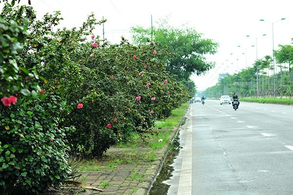 Hà Nội: Độc đáo con đường được phủ màu hồng bởi hoa dâm bụt - Ảnh 7.