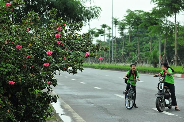 Hà Nội: Độc đáo con đường được phủ màu hồng bởi hoa dâm bụt - Ảnh 3.