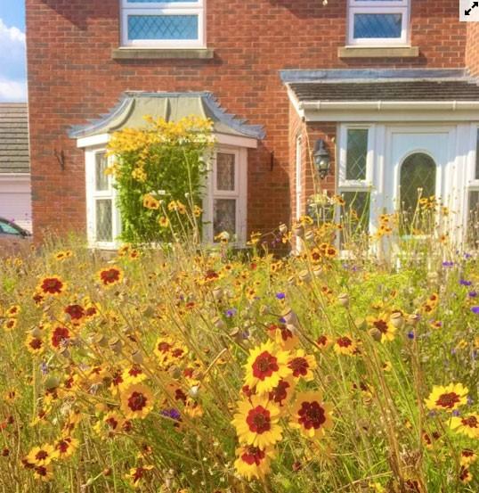 Người đàn ông biến bãi cỏ trước nhà thành cánh đồng hoa  - Ảnh 6.