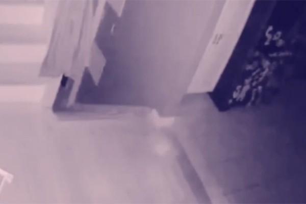 Chủ nhà phát hiện hồn ma của em bé và thú cưng qua camera - Ảnh 1.