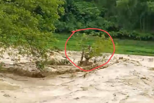 Nỗ lực giải cứu người đàn ông bị lũ cuốn mắc trên cây - Ảnh 3.