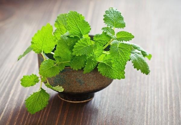 Mùi hương ở loại lá này có tác dụng đuổi gián hiệu quả gấp 100 lần hóa chất diệt côn trùng - Ảnh 1.