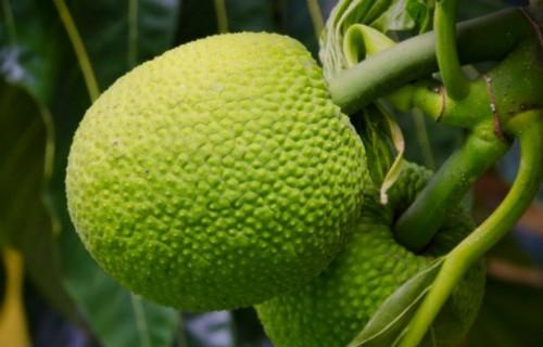 Mùi hương ở loại lá này có tác dụng đuổi gián hiệu quả gấp 100 lần hóa chất diệt côn trùng - Ảnh 6.