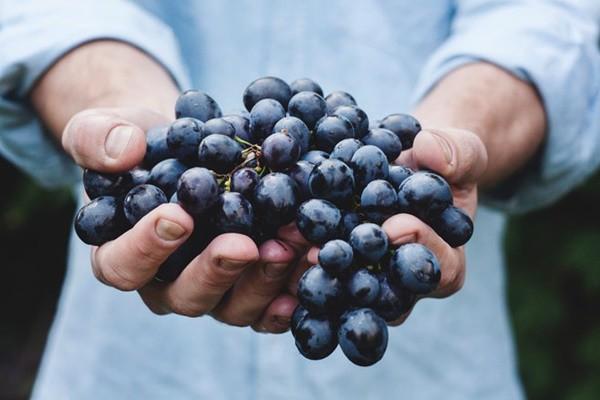 Một phụ nữ suýt mất mạng vì ăn quá nhiều nho, bác sĩ cảnh báo 3 lưu ý khi ăn trái cây kẻo tàn phá sức khỏe - Ảnh 2.