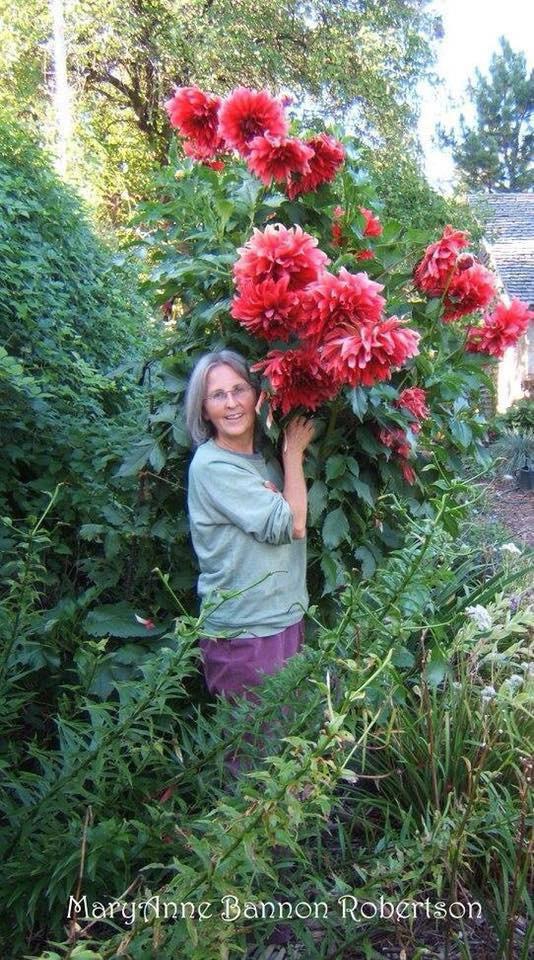 Khu vườn trồng đủ loại rau củ quả khổng lồ của ông bà lão yêu thích làm vườn sau khi nghỉ hưu - Ảnh 17.