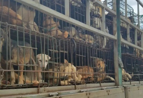TP HCM kêu gọi người dân không ăn thịt chó - Ảnh 1.