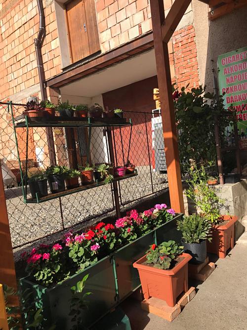 Cặp vợ chồng biến sân bê tông thành vườn hoa - Ảnh 2.