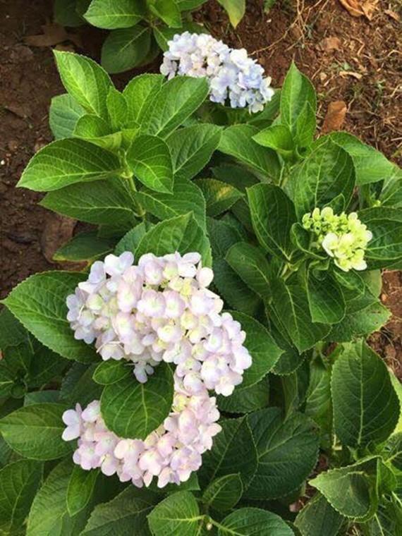 Nữ hoàng cảnh nóng Việt Nam để mặt mộc lộ rõ dấu hiệu tuổi tác đi chăm vườn cây 5000 m2 đầy hoa thơm - Ảnh 8.