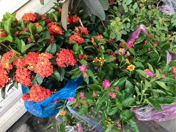 Nữ hoàng cảnh nóng Việt Nam để mặt mộc lộ rõ dấu hiệu tuổi tác đi chăm vườn cây 5000 m2 đầy hoa thơm - Ảnh 9.