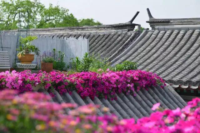Cô gái trẻ bỏ ra 1,3 tỷ đồng cải tạo đất, mua giống hoa, biến sân nhà thành khu vườn đẹp lung linh  - Ảnh 23.