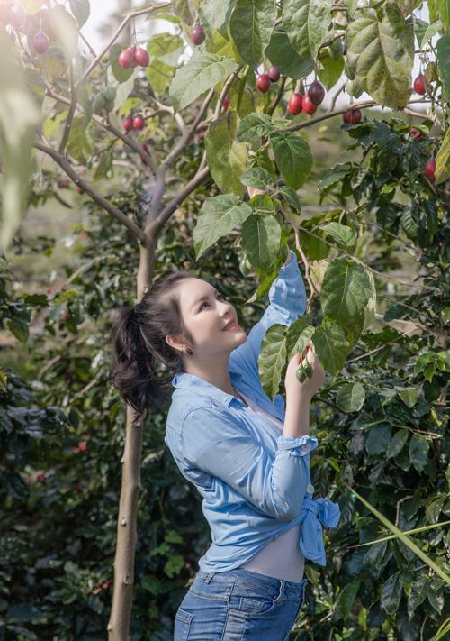 Lý Nhã Kỳ thu hoạch cà chua - Ảnh 1.