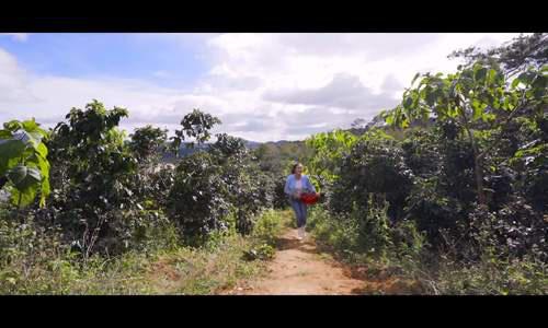 Lý Nhã Kỳ thu hoạch cà chua - Ảnh 11.