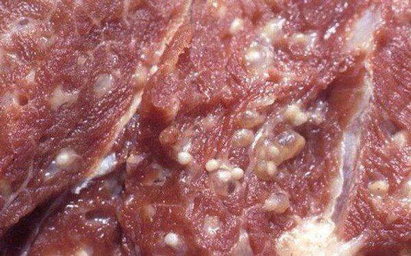 4 loại thịt lợn dù rẻ mấy cũng chớ mua kẻo rước giun sán hay bệnh tật vào người  - Ảnh 1.