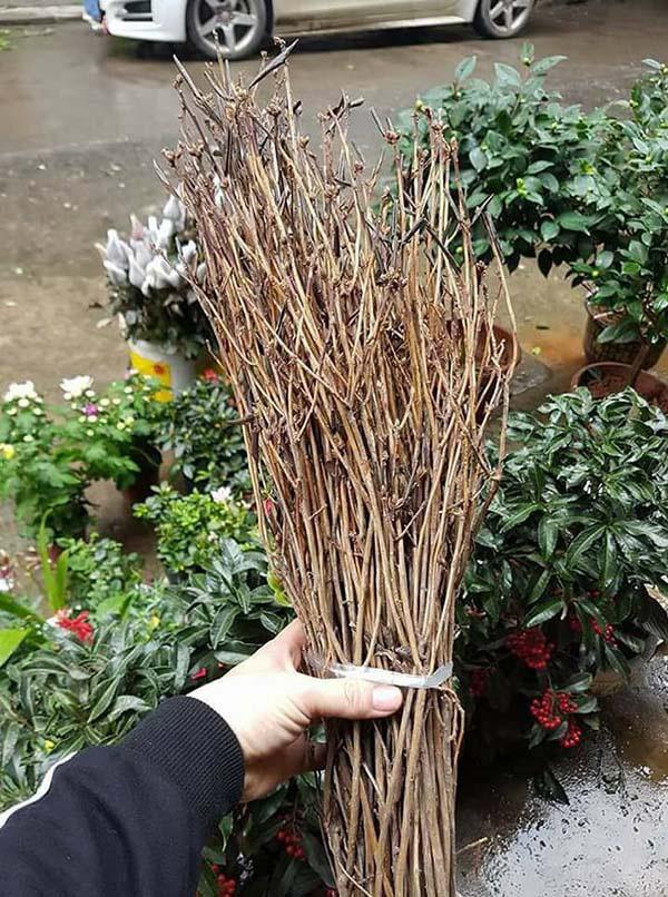 Đủ chiêu thức lừa đảo bán các loại cây hoa chưng Tết: Người tiêu dùng ba đầu sáu tay phòng bị - Ảnh 1.