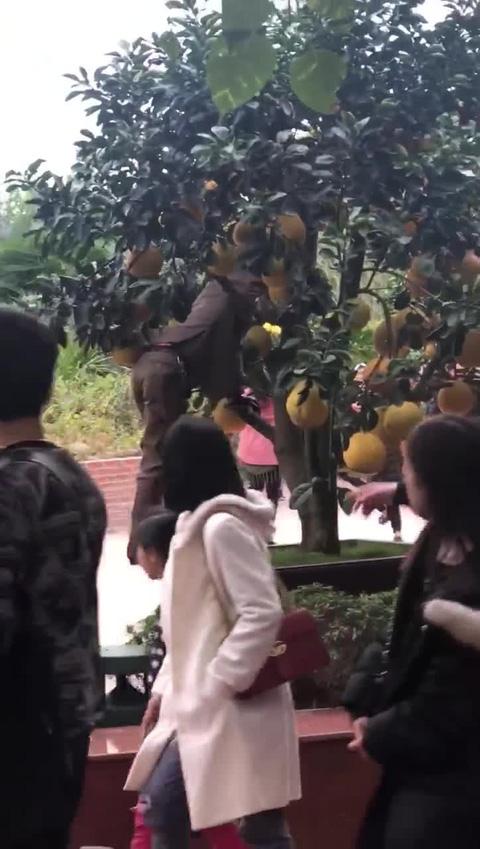 Hình ảnh xấu xí đầu năm: Nam thanh nữ tú trèo lên cây bưởi, mái chùa tạo dáng gây phẫn nộ - Ảnh 4.